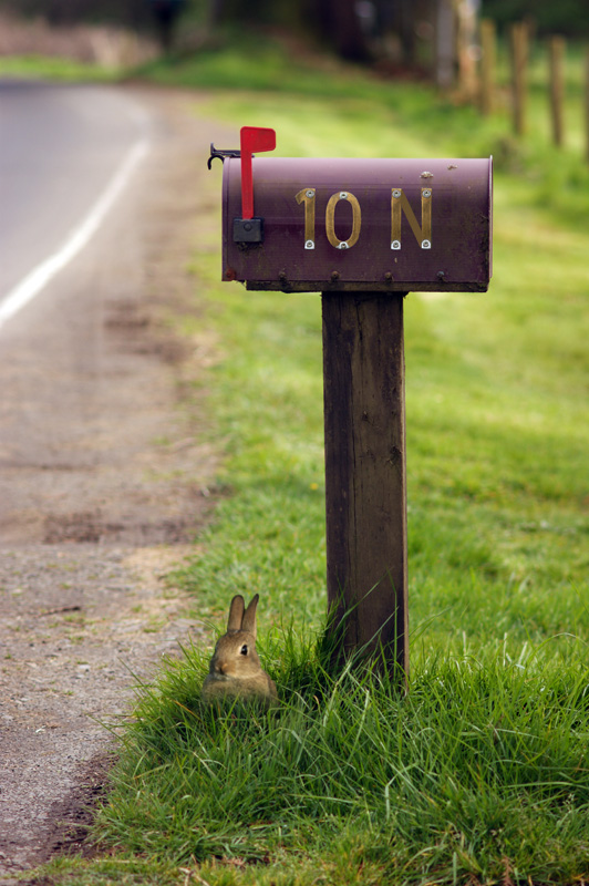 Rabbit next to mailbox with 10 N medium